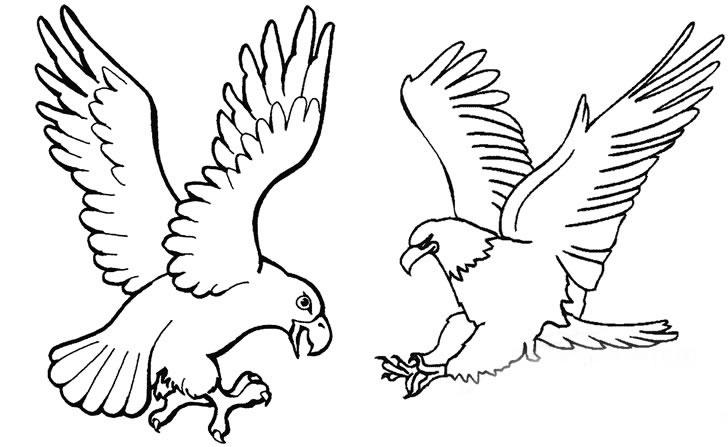 速写-老鹰