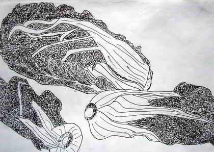 白菜简笔画_白菜图片欣赏_白菜儿童画画作品-有伴网