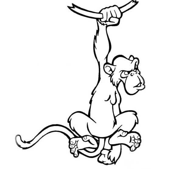 简笔画-善于攀爬的猴子