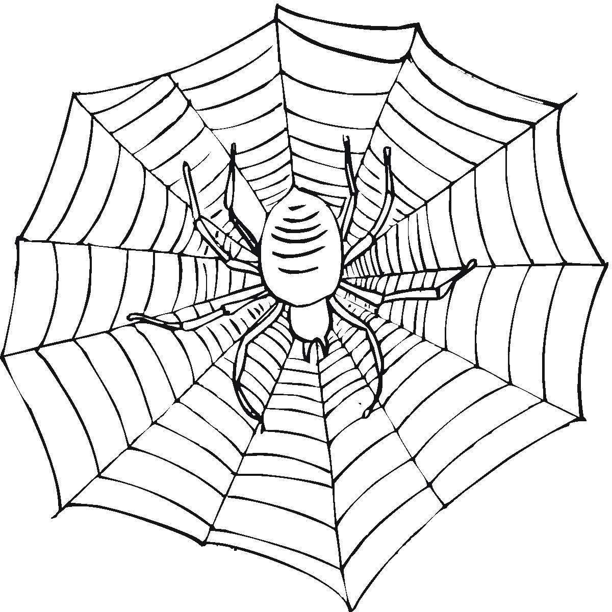 儿童画画 简笔画 动物简笔画-万圣节蜘蛛的简笔画儿童画画  上一张下