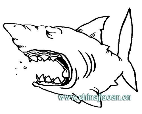 简笔画-鲨鱼动物简笔画