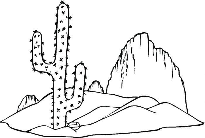 幼儿教师植物简笔画-教你画可爱的仙人掌简笔画