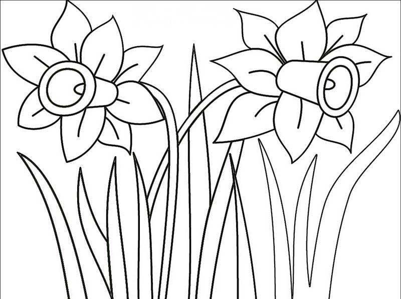 美丽的水仙简笔画 美丽的水仙图片欣赏 美丽的水仙儿童画画作品