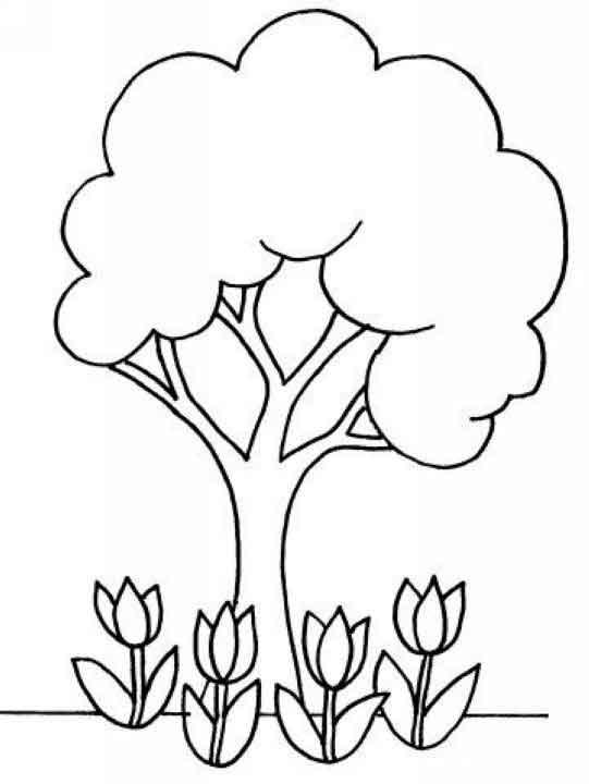 植物生长过程图解简笔画