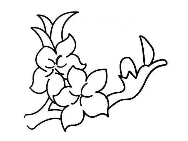 桃花植物简笔画图片欣赏