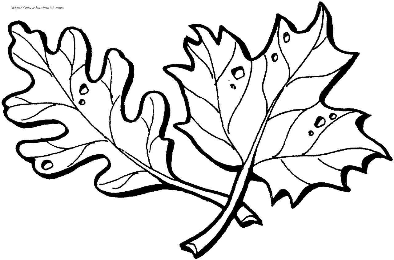 这幅树叶简笔画画面优美,构图简洁,充满孩子们的奇思妙想,非常适合宝宝学习!