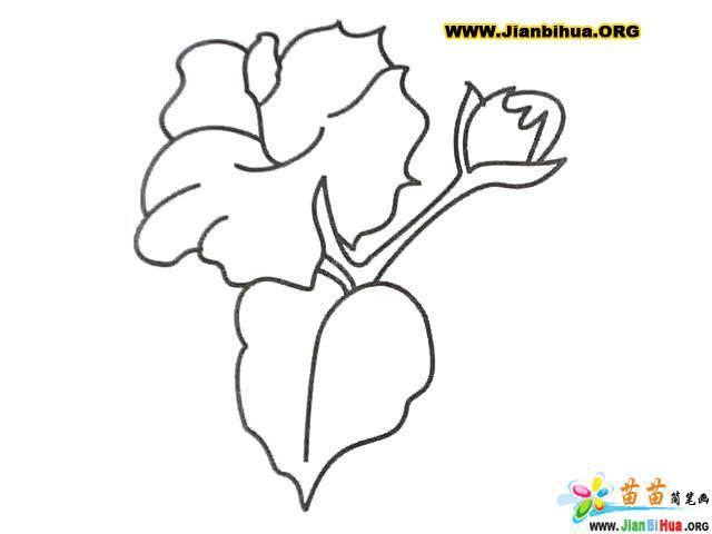 简笔画-植物简笔画-棉花