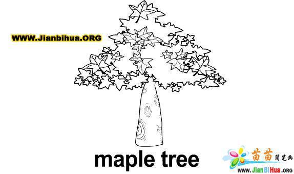 儿童画画 简笔画 枫树植物简笔画儿童画画