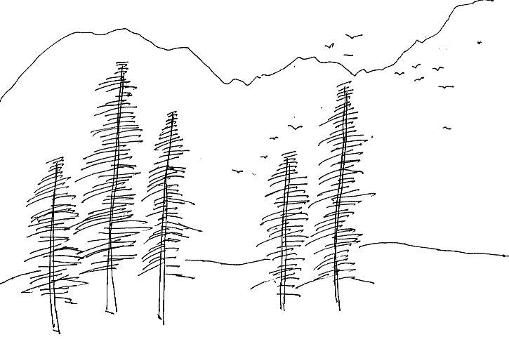 教你如何画小树的简笔画教程简笔画 教你如何画小树的简笔画教程图片