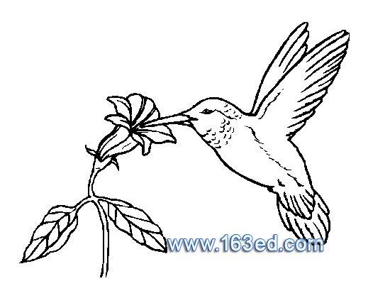 关于小鸟的简笔画教程简笔画