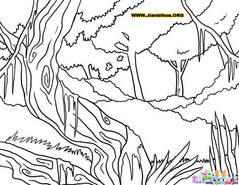 热带原始森林风景简笔画图片欣赏 热带原始森林风景简笔画儿童画画