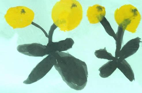 枇杷简笔画 枇杷图片欣赏 枇杷儿童画画作品