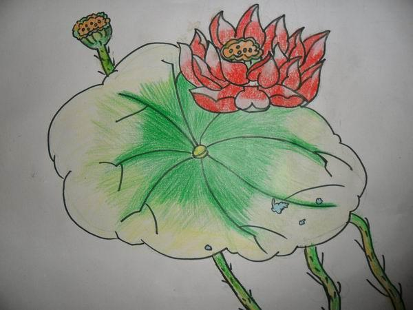 儿童画画 蜡笔画 美丽的荷花儿童画画