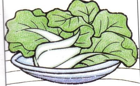 营养的小青菜简笔画 营养的小青菜图片欣赏 营养的小青菜儿童画画作品