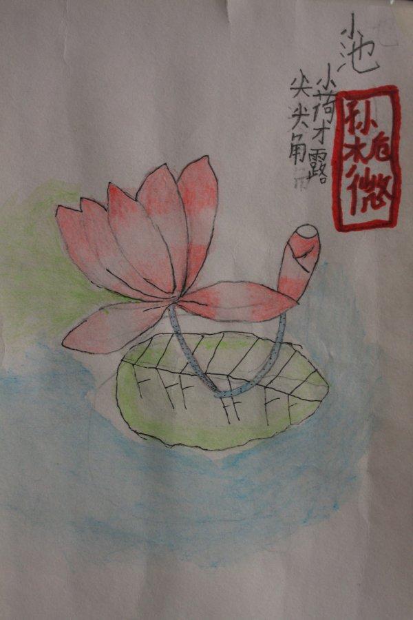 铅笔画-夏日荷花图