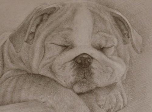 睡觉中的小狗简笔画_睡觉中的小狗图片欣赏