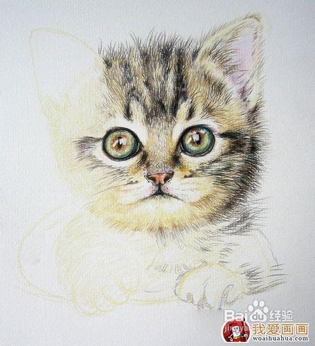 儿童画画 铅笔画 可爱的小猫咪儿童画画