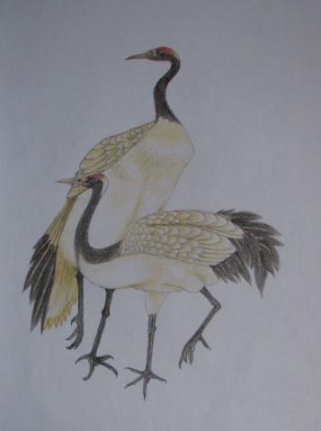 铅笔画-两只仙鹤