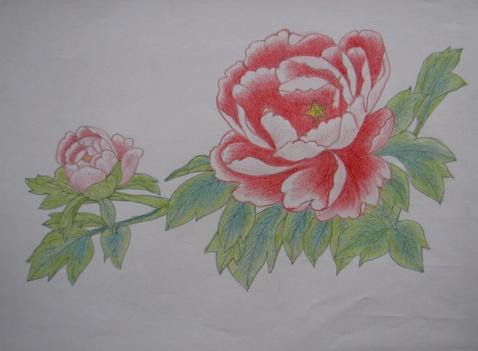 工笔画-美丽的牡丹花