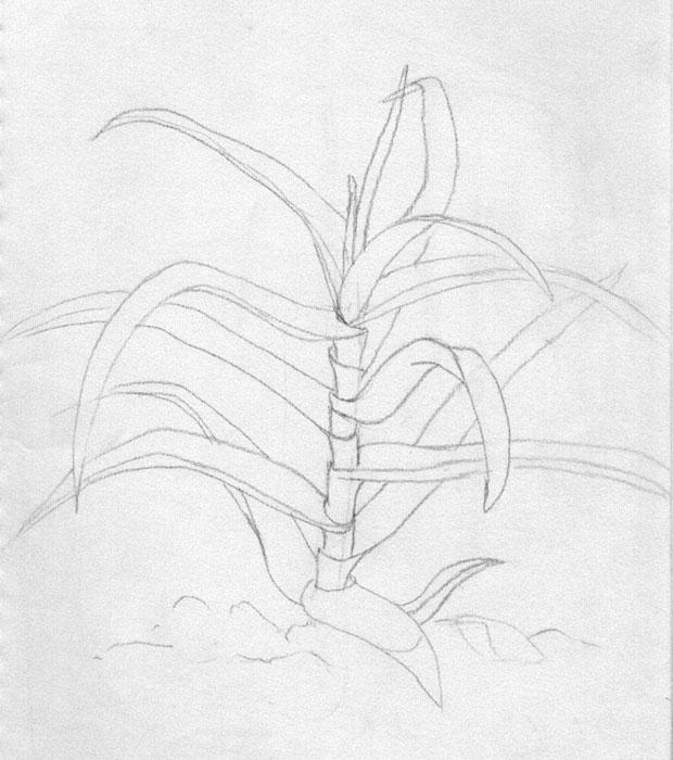 植物速写简笔画_植物速写图片欣赏_植物速写儿童画画
